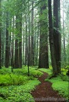 redwoods-20-big.jpg