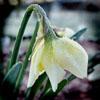 spring100